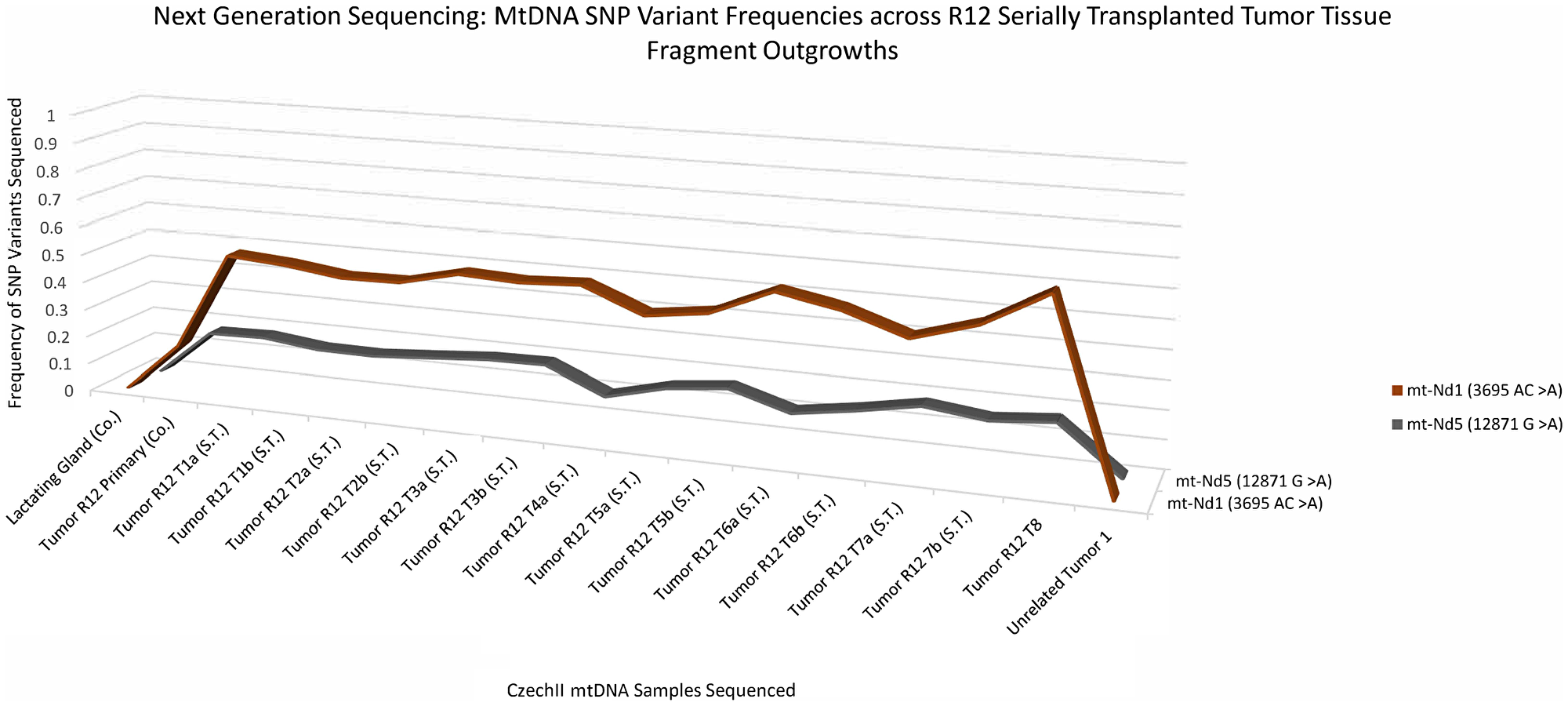 CzechII mammary R12 tumor mtDNA SNP variant calling via Next Generation sequencing.