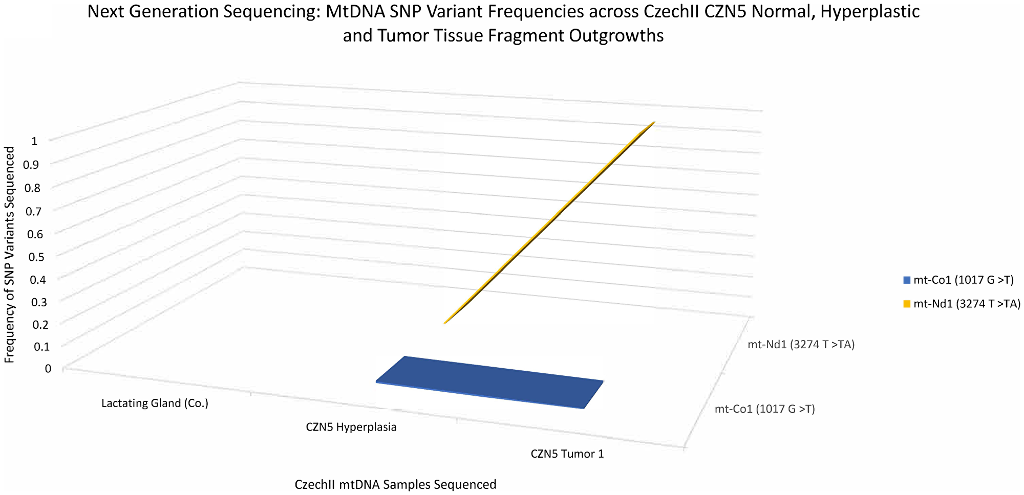 CzechII mammary CZN5 tumor 1 mtDNA SNP variant calling via Next Generation sequencing.