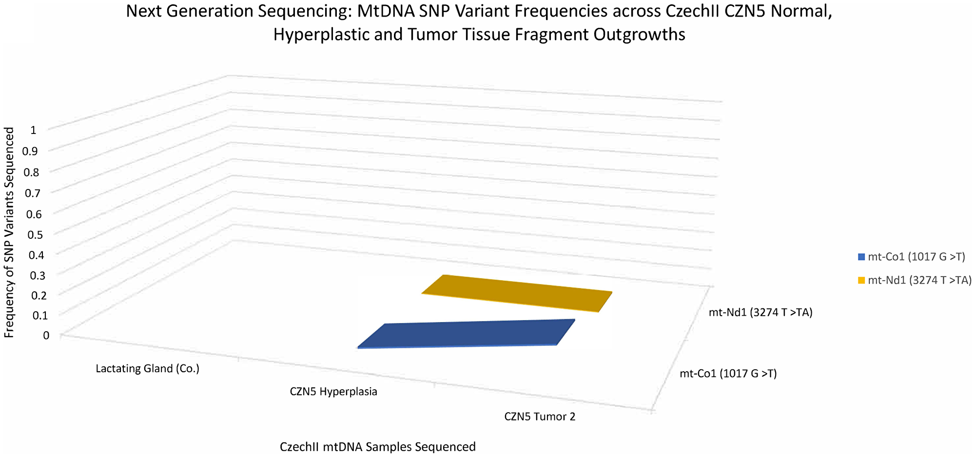 CzechII mammary CZN5 tumor 2 mtDNA SNP variant calling via Next Generation sequencing.