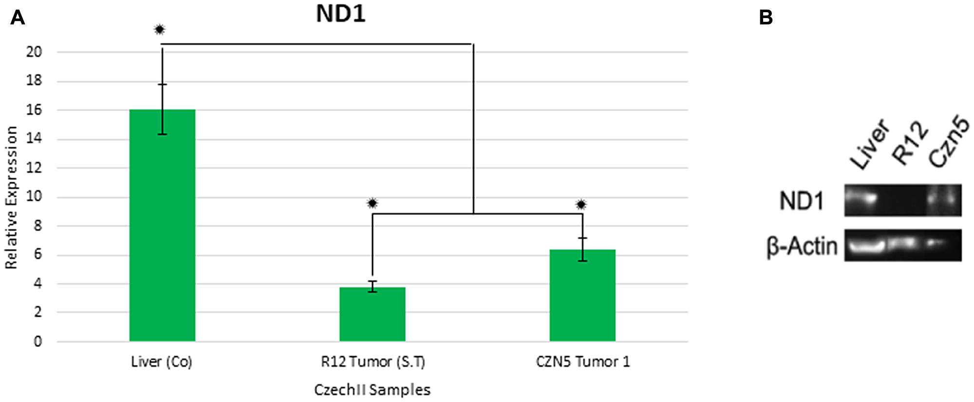 Gene expression of mt-Nd1 in CzechII tumor samples.