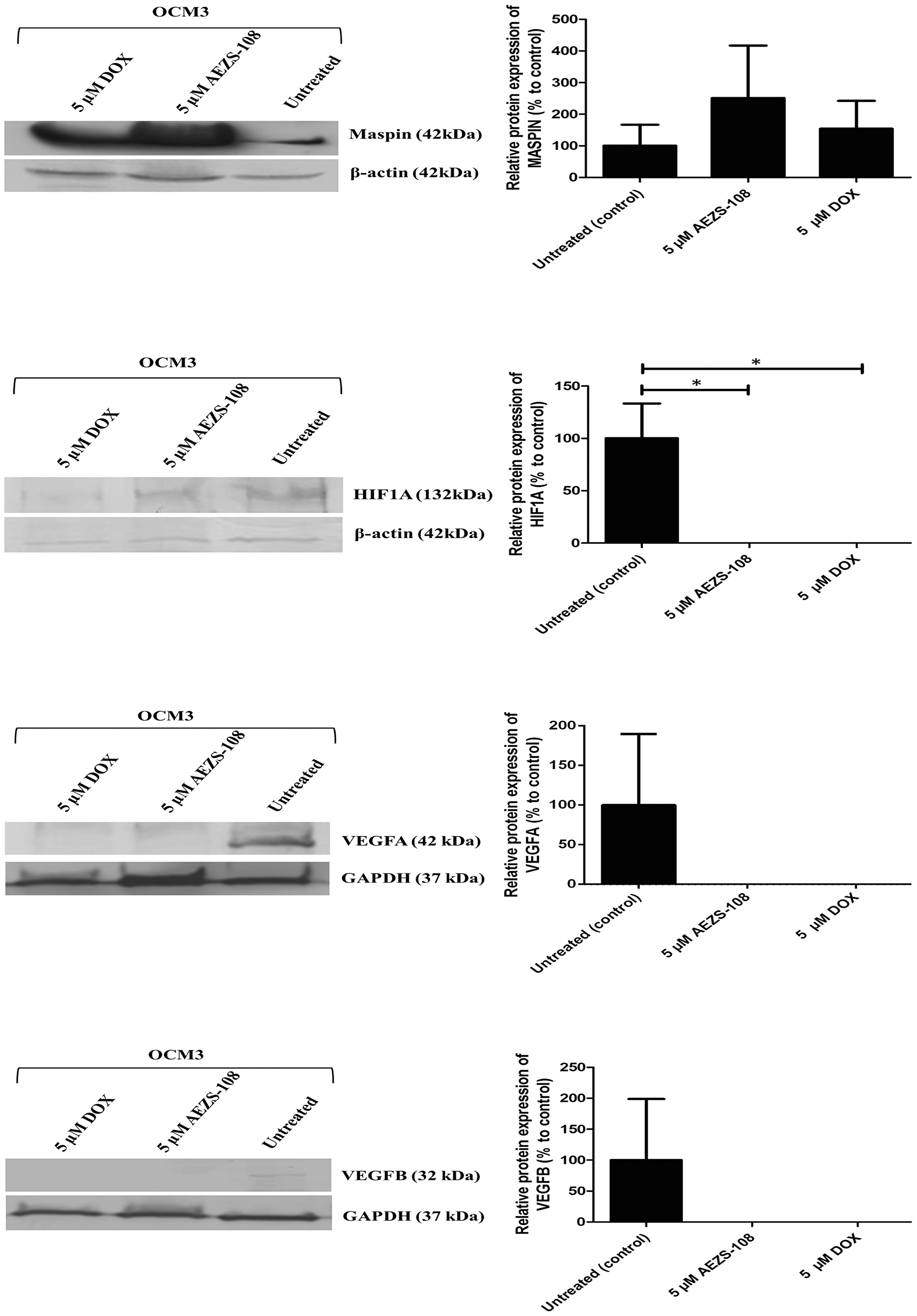 Western blot analysis of MASPIN, HIF1A, VEGFA and VEGFB protein expression after 24 hours of treatment with 5 µM AEZS-108 and 5 µM free DOX treatments from OCM3 cells.
