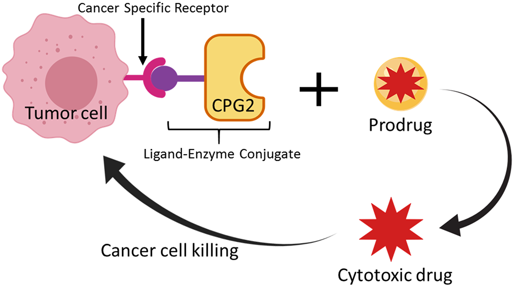 Schematic representation of the Ligand-Directed Enzyme Pro-Drug Therapy (LDEPT) strategy.