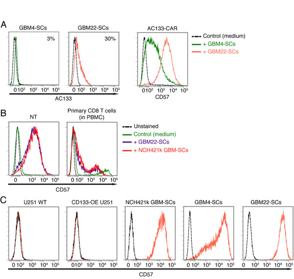 Upregulation of CD57 on AC133-CAR T cells or nontransfected activated T cells upon co-culture with CD57-positive GBM-SCs.