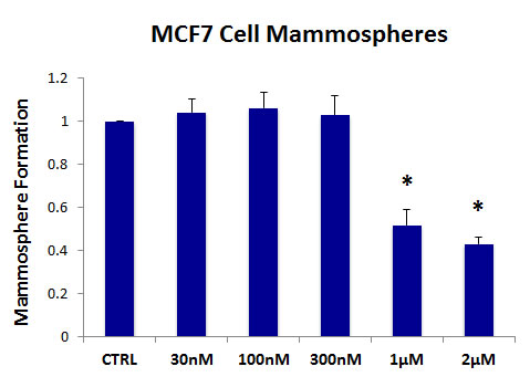 The MCT1/2 inhibitor AR-C155858 significantly reduces mammosphere formation in MCF7 cells.