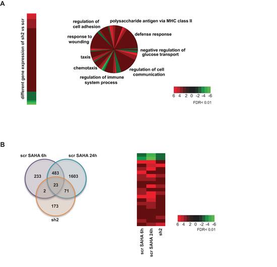 Gene expression profile.