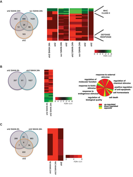 Comparative analysis between HDAC enzymatic inhibition and HDAC2 knockdown A.
