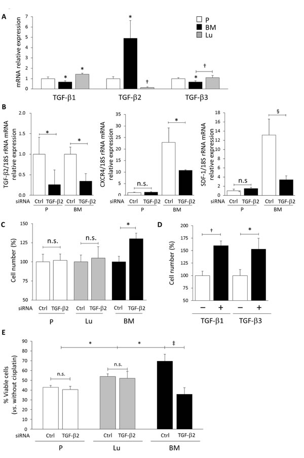 The SDF-1-CXCR4-dependent slow-cycling state and drug resistance in BM-DTCs requires TGF-β2.