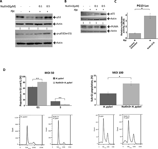 Nutlin-3 restores p53 activity and increases cell death of H. pylori-infected cells.