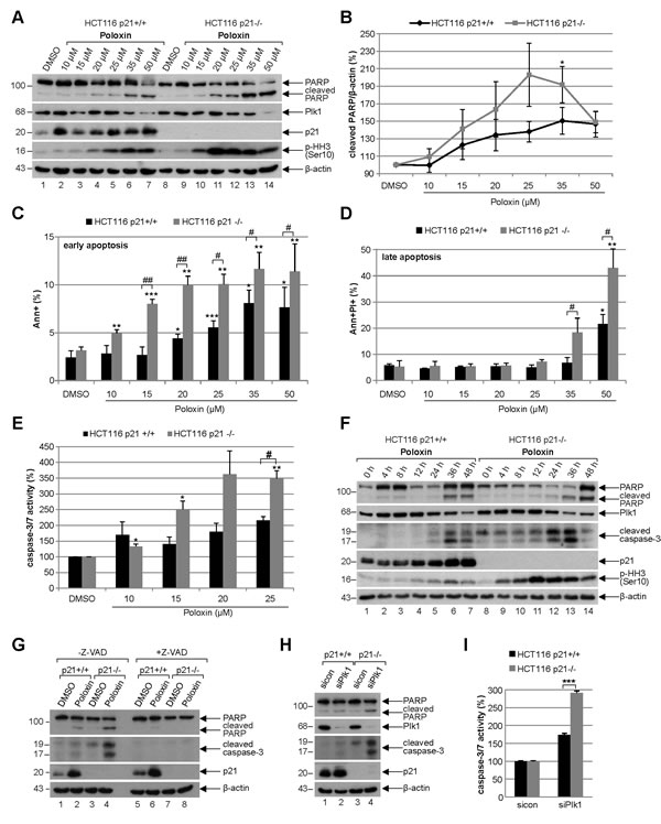 Poloxin induces strong apoptosis and more DNA damage in HCT116 cells without p21.