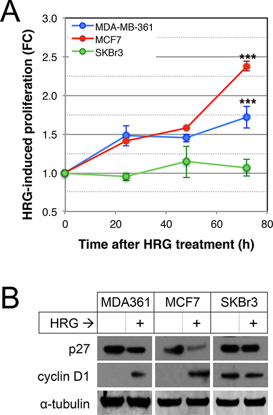 Effects of HRG on proliferation of luminal HER2+ breast cancer cell lines.