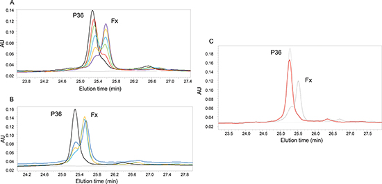 Analysis of P36 peptide cleavage by plasmin.