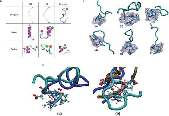 Molecular dynamics simulations: setup and highlight of NPED turn.