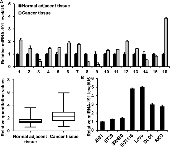 miR-191 is up-regulated in colon cancers.