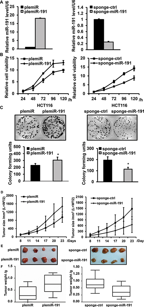 miR-191 promotes cell viability and proliferation.