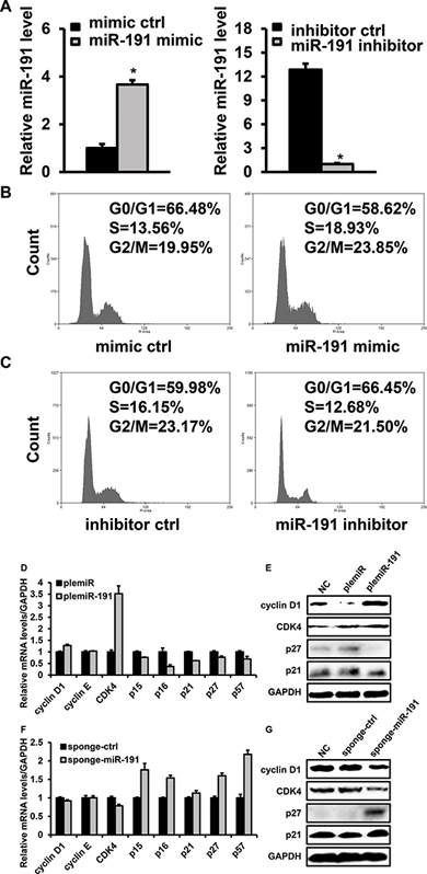 Effects of miR-191 on the cell cycle distribution of HCT116 cells.