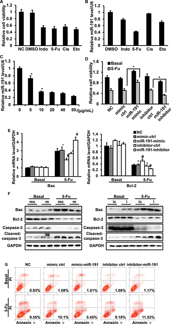 The involvement of miR-191 in the 5-Fu-induced cell apoptotic pathway in HCT116 cells.
