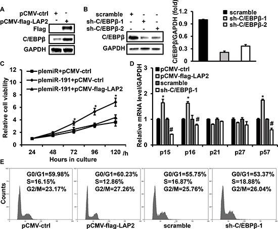 C/EBPβ is involved in miR-191 induced cell growth advantage.