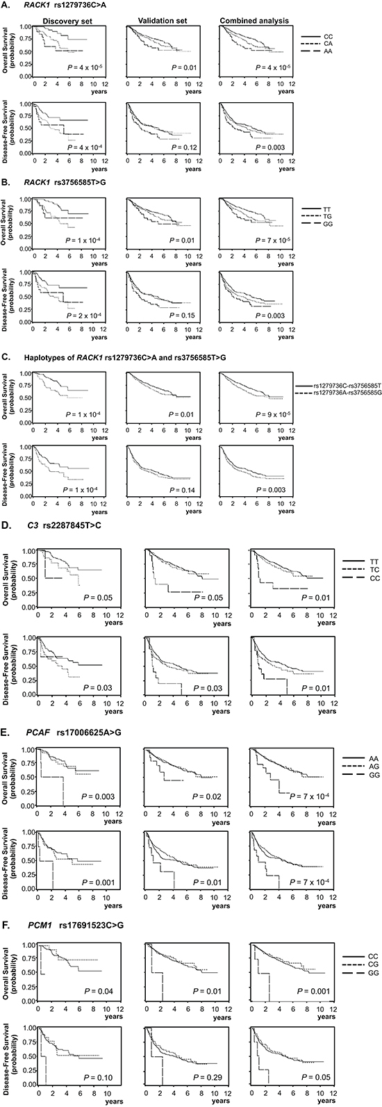 Kaplan-Meier plots of overall survival and disease-free survival according to genotypes and haplotypes.