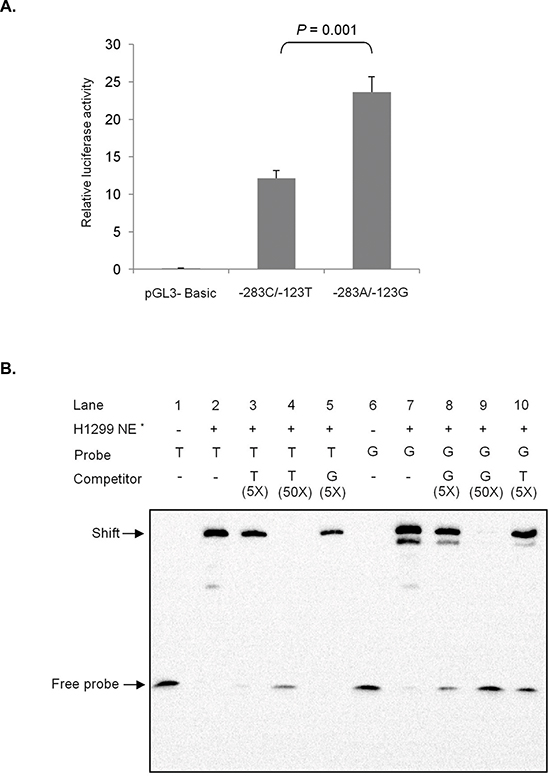 Effect of rs1279736C>A and rs3756585T>G (-283 and -123 from transcription start site, respectively) polymorphisms on RACK1 promoter.