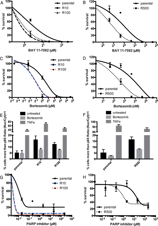 PARP inhibitor-resistant cells are sensitive to NF-κB inhibition.