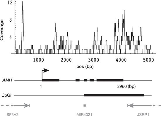 DNA methylation pattern of AMH gene.