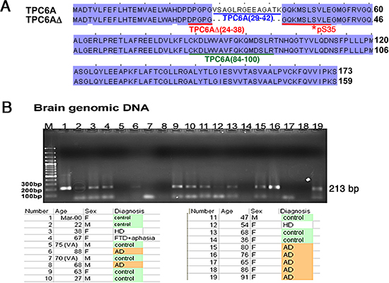 TRAPPC6A isoforms and gene.
