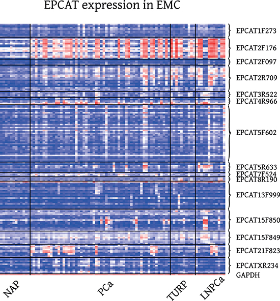 Expression of 15 RT-PCR validated EPCATs in EMC Exon Array samples.