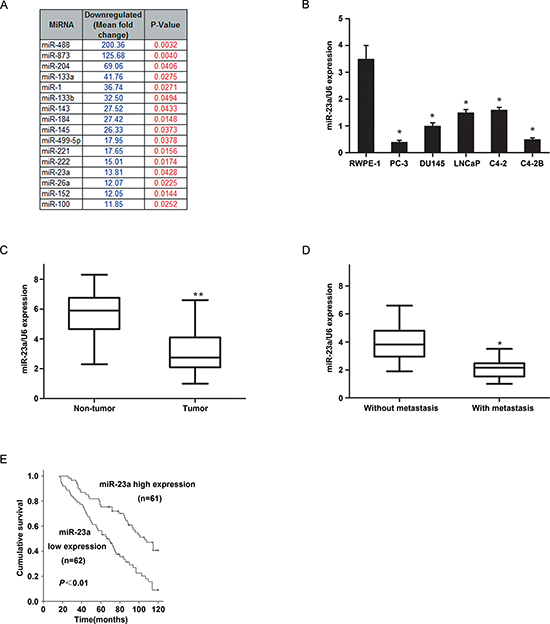 The expression of MiR-23a in prostate cancer cell lines and tissues and its prognostic values in patients.