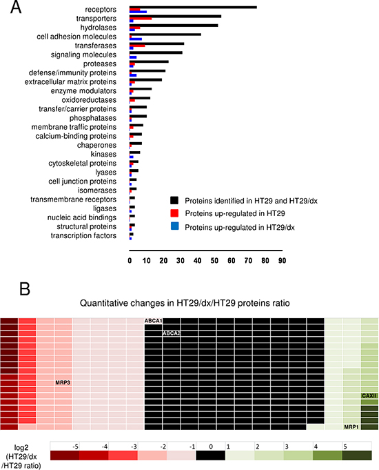 CSC technology enables the identification and quantitative comparison of the surface glycoproteome of human chemosensitive and chemoresistant colon cancer cells.