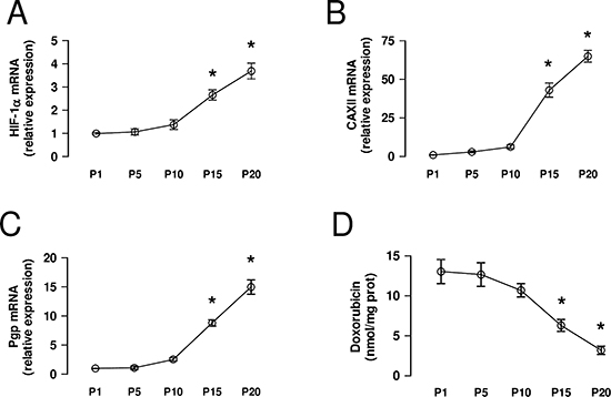CAXII increases during the acquisition of chemoresistance.