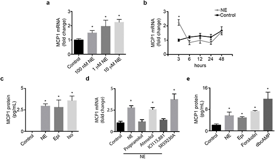 Catecholamines induce MCP1 expression.