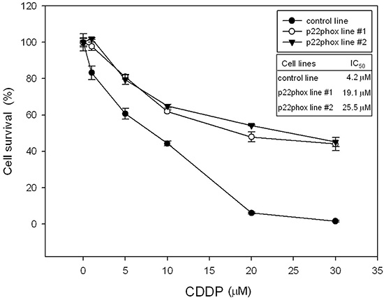 Increased survival rates of p22phox stable lines treated with CDDP.