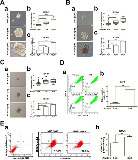 Morphine promotes cancer stem cell properties.