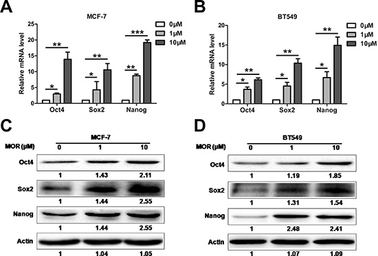 Morphine increases the expression of Sox2, Oct4 and Nanog.