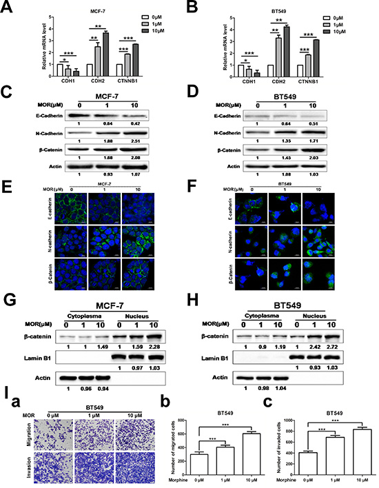 Morphine promotes EMT and metastasis.