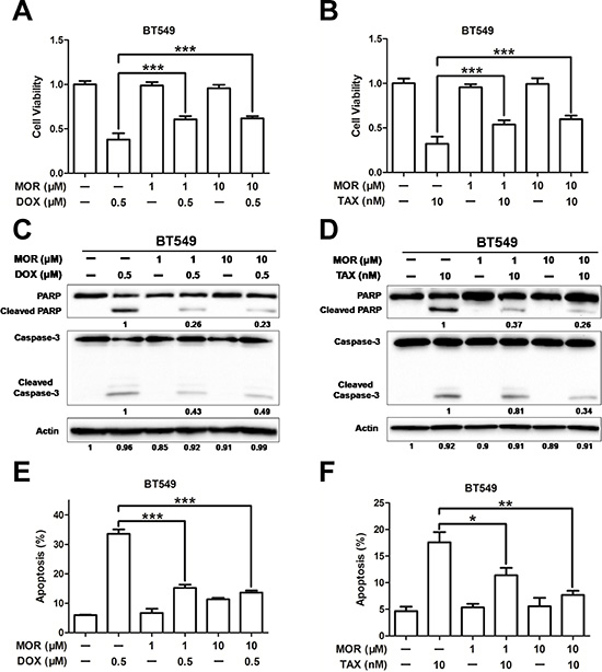 Morphine induces resistance to doxorubicin and paclitaxel.