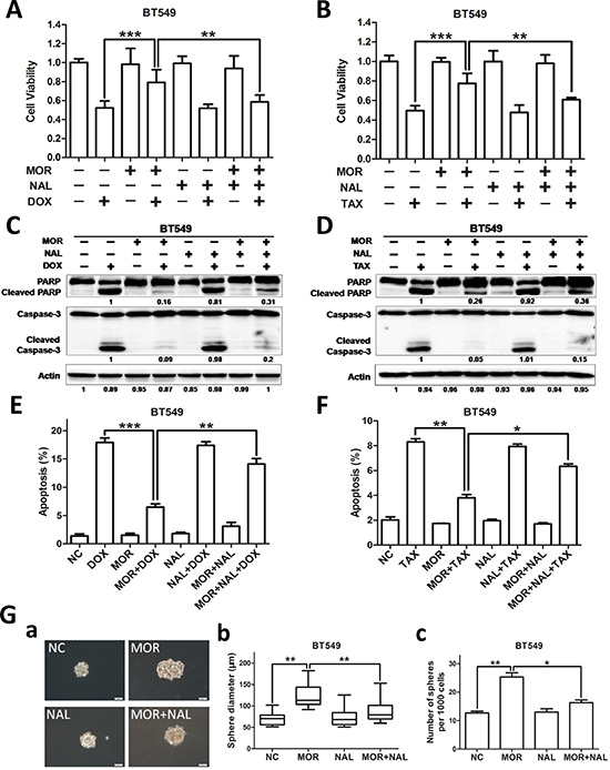 Nalmefene reverses morphine-induced cancer stem cell properties and chemoresistance.