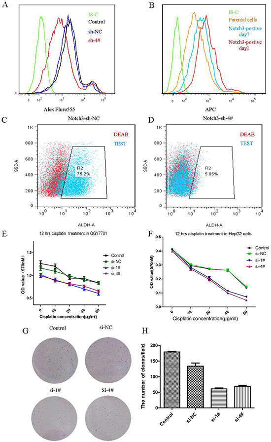 Notch3 regulates the stemness of cancer cells.