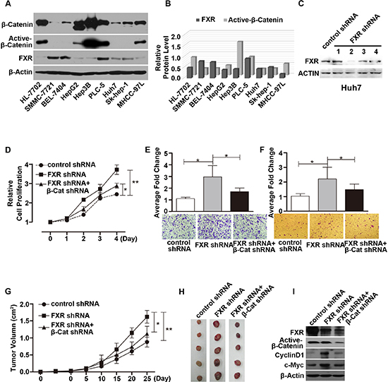 Loss of FXR induced oncogenic behavior via Wnt/β-Catenin signaling in Huh7 cells.