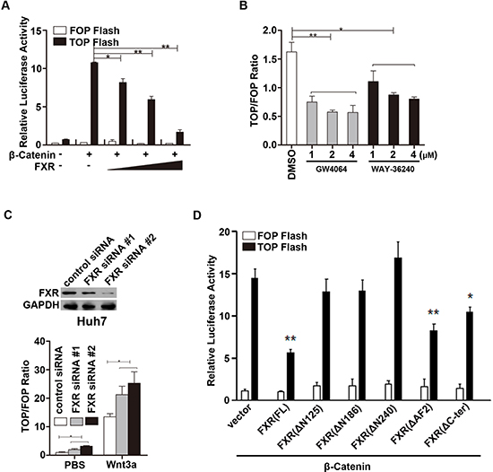 FXR repressed β-Catenin mediated transcriptional activity.
