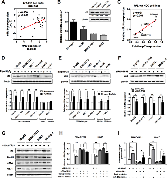 miR-34a induced senescence is regulated by p53.