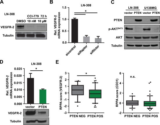 Inhibition of the PI3K/AKT/mTOR pathway reduces tumoral VEGFR-2 expression.