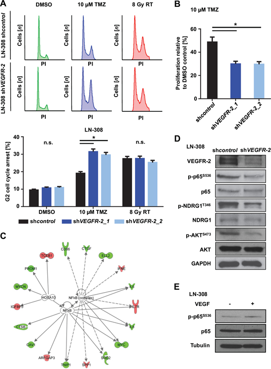VEGFR-2 promotes resistance to alkylating chemotherapy and activates NF-κB-dependent signaling pathways.