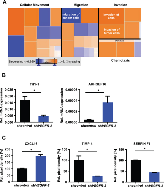 VEGFR-2 knock-down cells reveal an invasion-prone gene and protein expression profile.