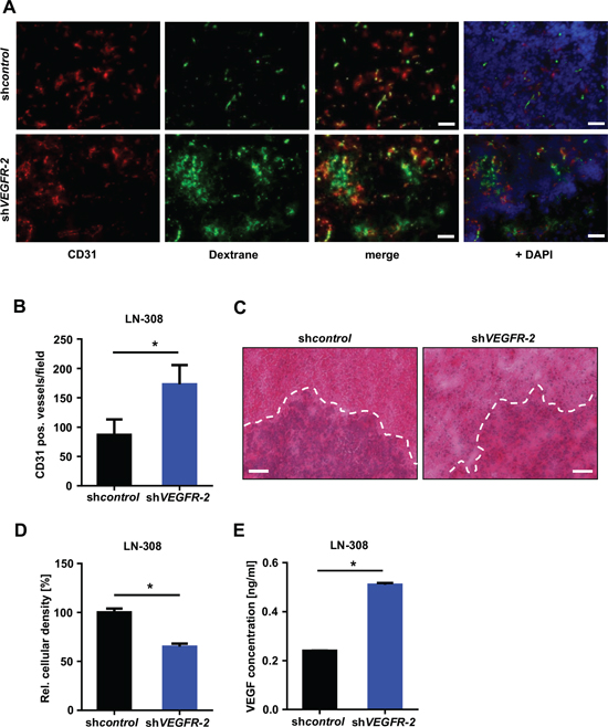 Selective knock-down of glioma cell VEGFR-2 induces a proangiogenic growth pattern in a xenograft mouse model.