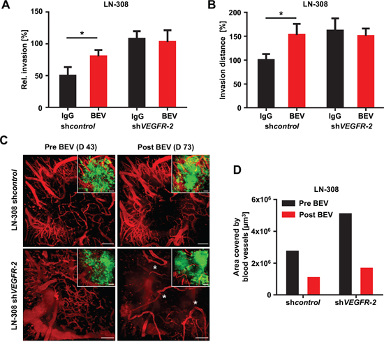 Treatment with BEV exerts diminished antiangiogenic but enhanced invasive effects in VEGFR-2-positive tumors.