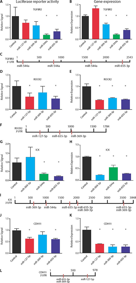 Co-repression of target genes by 14q32-encoded miRNAs.