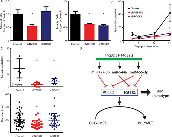 Stable suppression of microRNA target genes TGFBR2 and ROCK2 phenocopies oligometastatic state.