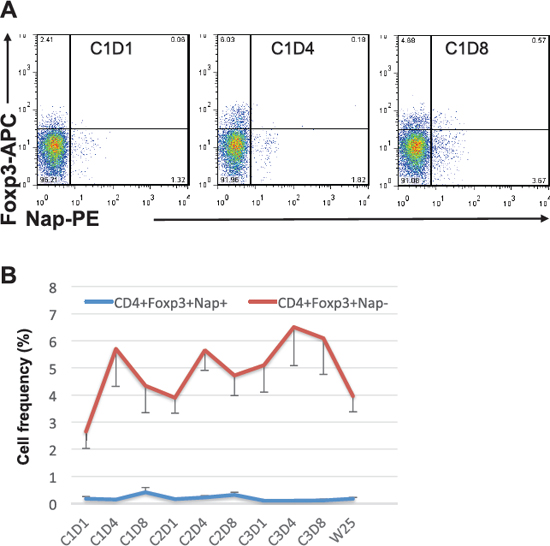 Foxp3 expression within CD4+Nap+/− T cells.
