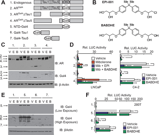 EPI-001 inhibits transcriptional activity of AR TAU1 and TAU5 domains in reporter-based assays.